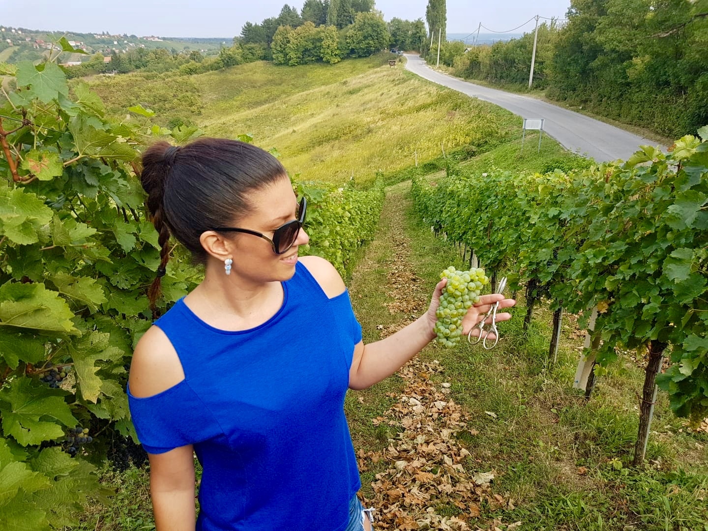 vinarijaalujević_alujević_vinarija_vilicomkrozhrvatsku